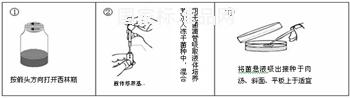苏云金芽孢杆菌 ATCC10792使用说明书